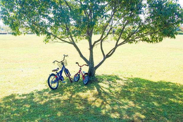 駐輪場でも狙われやすい! 駐輪場に自転車をおくときの防犯対策